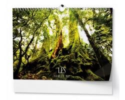 Nástěnný kalendář Les 2022