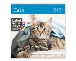 Nástěnný kalendář Cats 2020 - se samolepkami
