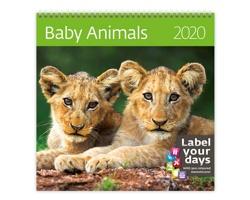 Nástěnný kalendář Baby Animals 2020 - se samolepkami