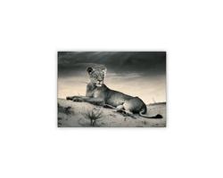 Luxusní dřevěný nástěnný obraz Lioness