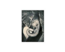 Luxusní dřevěný nástěnný obraz Little Elephant