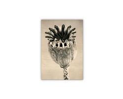 Luxusní dřevěný nástěnný obraz Poppyhead