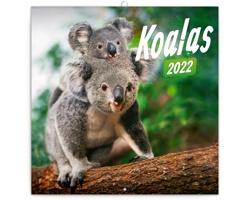 Nástěnný kalendář Koaly 2022 - poznámkový - západoevropský