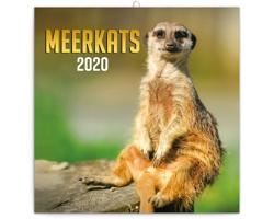Nástěnný kalendář Surikaty 2020 - poznámkový - západoevropský