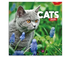 Nástěnný kalendář Kočky 2020 - poznámkový - západoevropský
