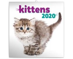 Nástěnný kalendář Koťata 2020 - poznámkový - západoevropský