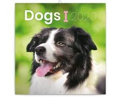 Nástěnný kalendář Psi 2020 - poznámkový