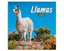 Nástěnný kalendář Lamy 2020 - poznámkový - západoevropský