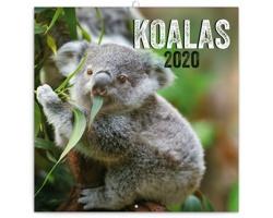 Nástěnný kalendář Koaly 2020 - poznámkový - západoevropský