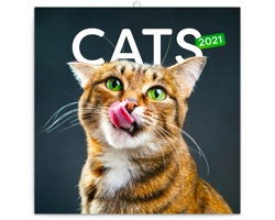 Nástěnný kalendář Kočky 2021 - poznámkový - západoevropský
