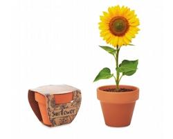 Terakotový květináč TROPES se semínky slunečnice - dřevěná