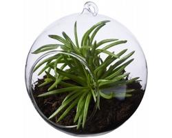 Skleněná nádoba pro pěstování rostlin MARQUEE se smyčkou pro zavěšení - transparentní čirá
