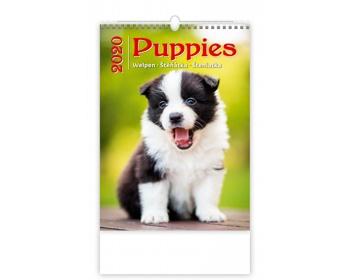 Náhled produktu Nástěnný kalendář Puppies / Welpen / Štěňátka / Šteniatka 2020